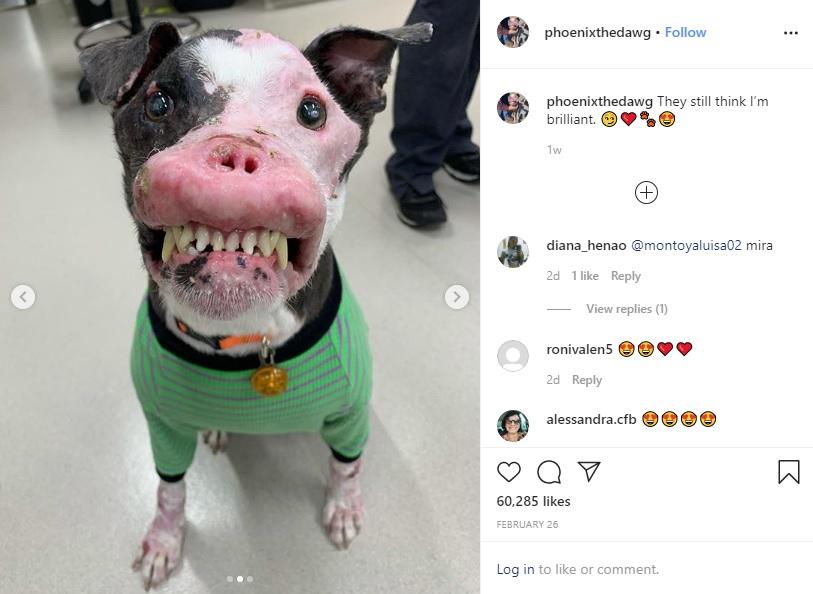 保護されて病気が判明した犬(画像は『Phoenix 2020年2月26日付Instagram「They still think I'm brilliant.」』のスクリーンショット)