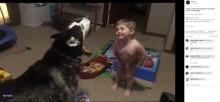 【海外発!Breaking News】抱腹絶倒! ハスキー犬と一緒に吠える2歳児(米)<動画あり>