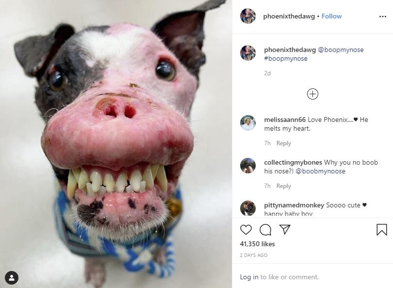 笑顔が素敵なフェニックス(画像は『Phoenix 2020年3月5日付Instagram』のスクリーンショット)