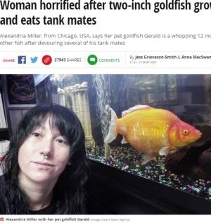 【海外発!Breaking News】お祭りで手に入れた金魚が2年で巨大化 体長30センチに(米)