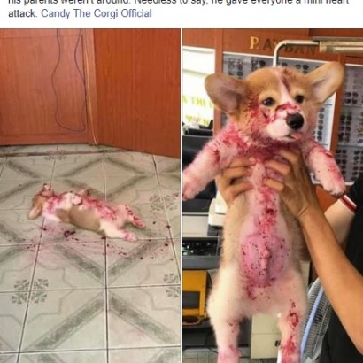 【海外発!Breaking News】床に血まみれ? いたずらした犬 死んだふりで飼い主を仰天させる