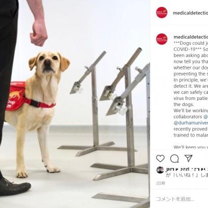 【海外発!Breaking News】英大学ら「新型コロナ探知犬」計画進める 6週間後の実現に向け「COVID-19に対する革命的な方法となり得る」(英)