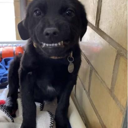 【海外発!Breaking News】「僕をもらって」 歯を見せて笑うアニマルシェルターの犬(米)<動画あり>
