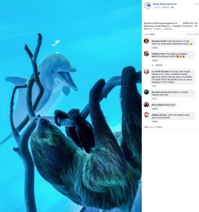"""突然訪問したナマケモノの""""チコ""""(画像は『Texas State Aquarium 2020年3月26日付Facebook「With the Aquarium temporarily closed, Chico the sloth had the opportunity for an up-close and personal meeting with some of our dolphins.」』のスクリーンショット)"""