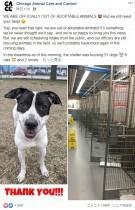 【海外発!Breaking News】自宅待機の影響か 動物保護施設で犬や猫が次々と新しい家族のもとへ(米)<動画あり>