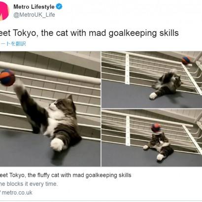 【海外発!Breaking News】凄腕ゴールキーパーのネコ 下から投げられるボールを確実にセーブ(伊)<動画あり>