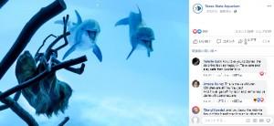【海外発!Breaking News】一時閉館中の水族館、イルカが突然の珍客に大興奮(米)<動画あり>