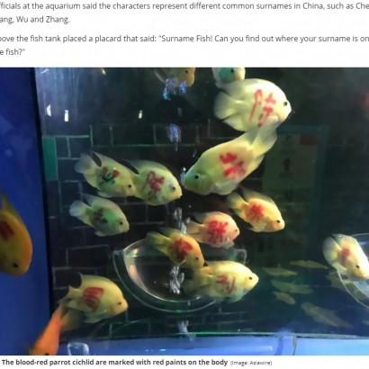 【海外発!Breaking News】中国の水族館、魚に人名を書いて「あなたの名字が見つかるかな?」SNS大炎上