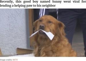 """【海外発!Breaking News】自主隔離の高齢女性のために飼い主と協力し食料品を届ける犬""""サニー""""(米)<動画あり>"""