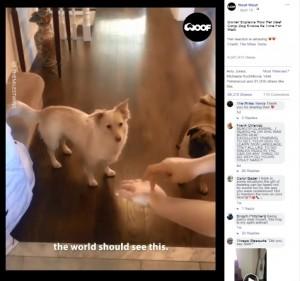 【海外発!Breaking News】耳に障がいを持つ犬 「散歩」の手話に大はしゃぎ(カナダ)<動画あり>