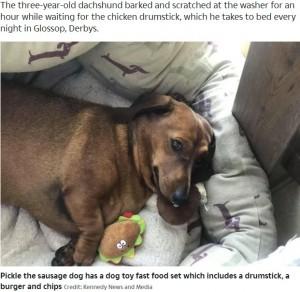 大好きなおもちゃと一緒に寝るピクル(画像は『The Sun 2020年4月25日付「IN A PICKLE Relieved sausage dog Pickle cuddles his favourite toy after it went into the washing machine for the first time」(Credit: Kennedy News and Media)』のスクリーンショット)