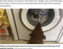 「僕のお気に入りが!」洗濯機に入れられたおもちゃを待ち続ける犬がキュート(英)<動画あり>