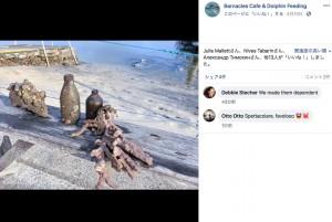 サンゴのかけらや空き瓶などミスティークが持って来たプレゼント(画像は『Barnacles Cafe & Dolphin Feeding 2020年4月10日付Facebook「Happy Easter to all our followers, we hope you are all celebrating it the best you can in these hard times and are staying safe.」』のスクリーンショット)