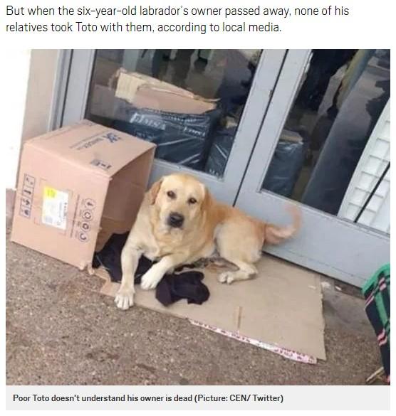 飼い主が戻ってくるのを信じて待つ犬(画像は『Metro 2019年3月16日付「Loyal labrador waits for owner outside hospital not knowing he is dead」(Picture: CEN/ Twitter)』のスクリーンショット)
