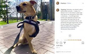 【海外発!Breaking News】捨てられた犬、左脚2本切断も右脚だけで走る! 「逆境を乗り越えて人をインスパイアする存在に」(米)