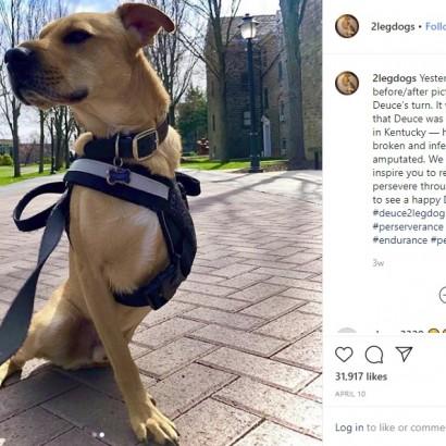 【海外発!Breaking News】捨てられた犬、左脚2本切断も右脚だけで走る! 「逆境を乗り越えて人をインスパイアする存在に」(米)<動画あり>