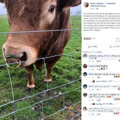 【海外発!Breaking News】電柱でお尻を掻いた牛 800戸以上の停電を起こす(スコットランド)