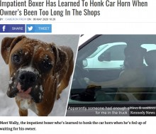 【海外発!Breaking News】「早く買い物を終わらせて!」車の中でクラクションを鳴らす短気な犬(米)<動画あり>