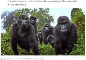 【海外発!Breaking News】野生のゴリラは食事中に感謝の歌を歌い、絶え間なくオナラをする 世界初の貴重映像をロボットゴリラで撮影(ウガンダ)