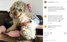【海外発!Breaking News】ハグが大好きな超大型犬 脳卒中を患った飼い主の回復を助け人々を笑顔に(英)
