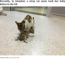 病気の我が子を人間の病院へ運んだ勇敢な母ネコ 病院スタッフの対応にも心温まる(トルコ)