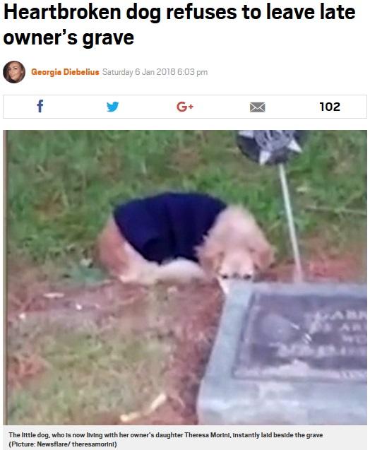 亡き飼い主の墓から離れない犬(画像は『Metro 2018年1月6日付「Heartbroken dog refuses to leave late owner's grave」(Picture: Newsflare/ theresamorini)』のスクリーンショット)