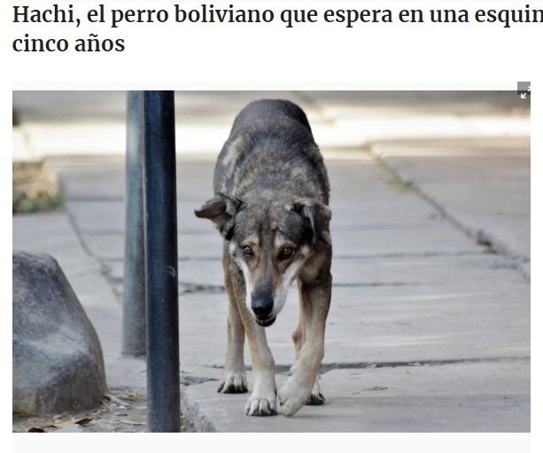 5年間思い出の場所から動かない犬(画像は『El Universo 2014年1月10日付「Hachi, el perro boliviano que espera en una esquina a su amo muerto hace cinco años」(EFE)』のスクリーンショット)