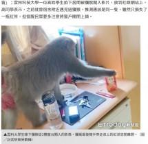 【海外発!Breaking News】学生寮に野生のサル乱入 紙パックの紅茶をくわえて立ち去る(台湾)