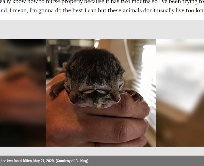 「ヤヌスネコ」のビスケットとグレイヴィー(画像は『FOX 46 Charlotte 2020年5月21日付「Meet Biscuits and Gravy, the two-faced Oregon kitten」(Courtesy of BJ King)』のスクリーンショット)