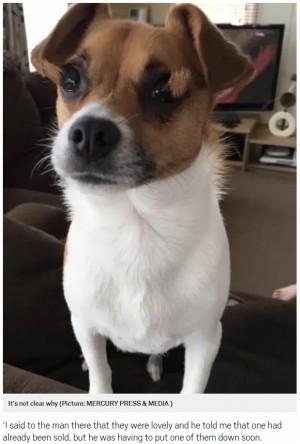 【海外発!Breaking News】眼球に毛が生えた子犬、殺処分を免れ今は新しい家族と幸せに(英)