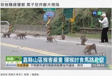 【海外発!Breaking News】爆竹でサルを撃退しようとした男性 誤爆で指切断(台湾)