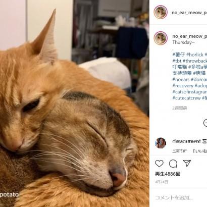【海外発!Breaking News】両耳を失った元野良猫、家族や親友に囲まれて幸せに暮らす(中国)