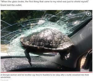 【海外発!Breaking News】「一体なぜ?」走行車のフロントガラスに飛んできた亀が突き刺さる(米)