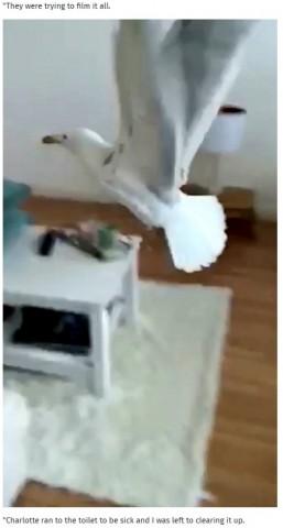 【海外発!Breaking News】家に入り込んだカモメがキッチンで嘔吐 最悪な置き土産に大絶叫!(英)<動画あり>