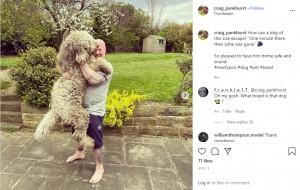 """身体を伸ばすと180センチを超える""""ロルフ""""(画像は『Craig Pankhurst 2020年4月5日付Instagram「How can a dog of this size escape?」』のスクリーンショット)"""