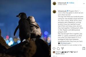 【海外発!Breaking News】パートナーを失った2羽のペンギン、互いに慰め合う姿が美しすぎる(豪)<動画あり>