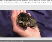 【海外発!Breaking News】2つの顔を持つネコが誕生 1つの口で鳴き、もう1つの口でミルクを飲むことも(米)