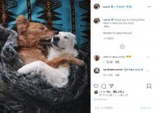 【海外発!Breaking News】がんで足を失ったゴールデン・レトリバーと相棒犬の強い絆 オーナーが撮る2頭の姿が美しい