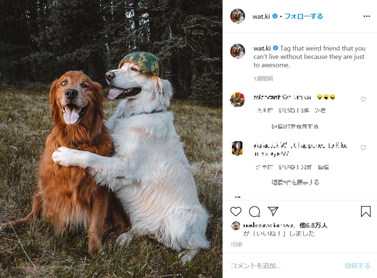 キコに寄り添うワトソン(画像は『Watson & Kiko 2020年5月7日付Instagram「Tag that weird friend that you can't live without because they are just to awesome.」』のスクリーンショット)