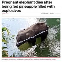 【海外発!Breaking News】妊娠中の象、爆薬の詰まったパイナップルを食べて死亡(印)<動画あり>