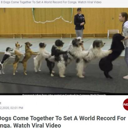 """【海外発!Breaking News】12歳少女による犬8頭の""""コンガライン"""" 世界記録を達成した動画が拡散中(独)<動画あり>"""