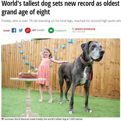 【海外発!Breaking News】世界一背の高い犬、長寿世界一のグレートデーンとして2つ目のギネス記録獲得か(英)