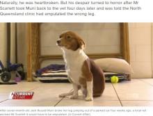 【海外発!Breaking News】右足を骨折した犬、獣医の手違いで左足を切断される(豪)