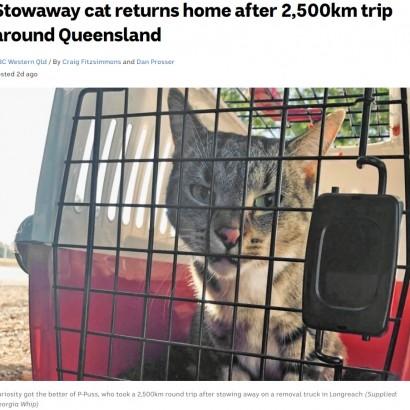 【海外発!Breaking News】引っ越しトラックに乗り込んでしまった猫、2500kmを移動し無事飼い主の元に戻る(豪)<動画あり>