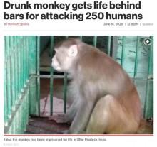 """【海外発!Breaking News】250人を襲ったアルコール依存症の猿、一生""""独房""""で過ごすことに(印)"""