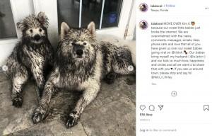 【海外発!Breaking News】いたずら好きの犬、真っ白な毛並みがたった10分で真っ黒に(米)