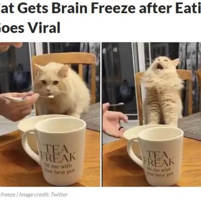 【海外発!Breaking News】アイスクリームを食べたネコが気絶寸前に「キーン」と頭痛か(カナダ)<動画あり>