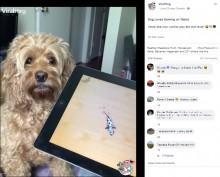 【海外発!Breaking News】性格が激変! iPadを激しく叩きゲームを楽しむ犬(カナダ)<動画あり>