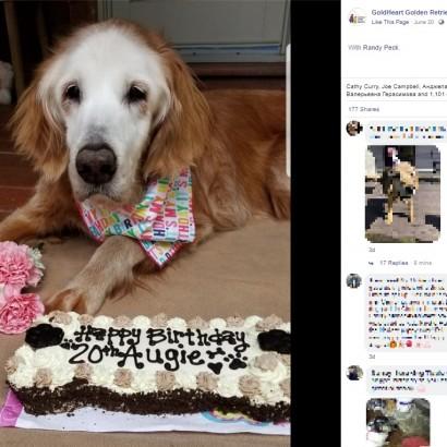 【海外発!Breaking News】人間で言えば120歳超! 世界最長寿のゴールデン・レトリバーが20歳に(米)