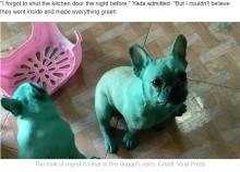 【海外発!Breaking News】やらかしちゃった飼い犬たち イタズラして全身緑色、祖母の入れ歯を口にスポッ!<動画あり>